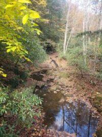 Bear Run creek that goes under Fallingwater House