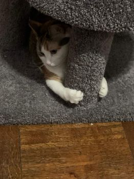 Princess using her scratching post