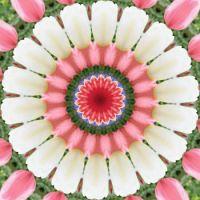 kaleidoscope 315 white tulips large