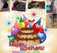 Scallywag Squad: Happy Birthday #1