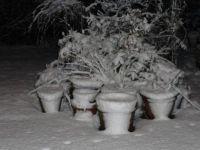 Pots in Snow in 2012