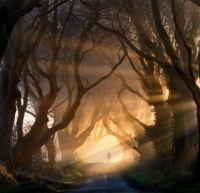 The Dark Hedges in Northern Ireland-Stephen Emerson