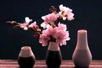 Sakurové květy