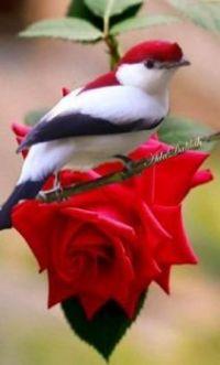 Beautiful Birds - No 46