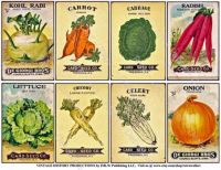 Victorian Seed Catalog De Giorgi Vegetables
