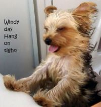 windy day - hang on!