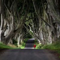 1000-Year Old Yew Trees in West Wales