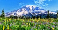 Mt. Rainier Meadow