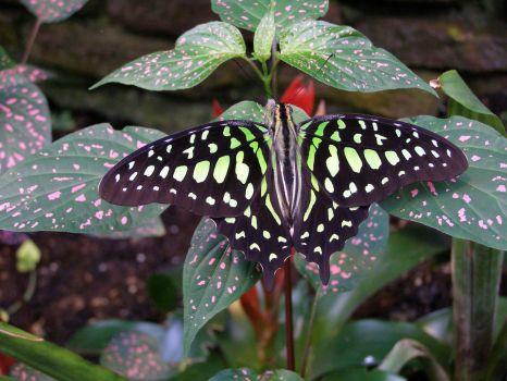... a další motýl :-)