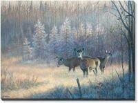 Morning Trio - Whitetail Deer by Jim Kasper