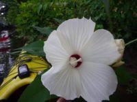 Unknown river flower