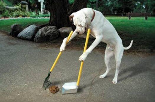 Uklízející psík