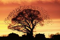 Flock of Birds in a Tree