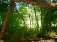 Redwoods!