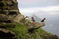 Skellig Michael (Michael's Rock), County Kerry, Ireland #4