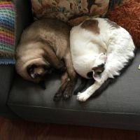 A pair of sleeping cats