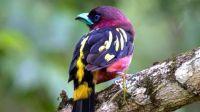 Exotic small bird
