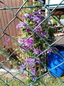 na cizí zahradě