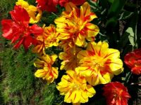 red and yellow spring