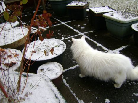 Freya - Who keeps leaving all this white stuff out here?