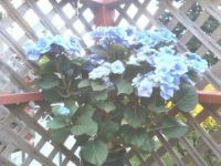 on my deck