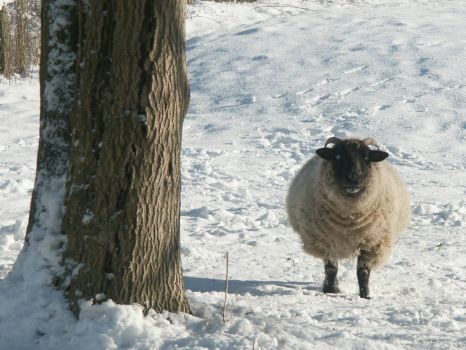 Two-legged sheep :-) - 29th Jan 2004