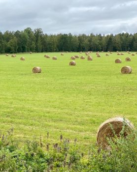 Hay for the winter