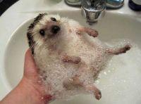 Hedgehog Bath Time