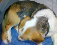 Spot and Sox having a cuddle