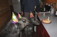 Wolfhound Birthday Party.  Complete with hats!