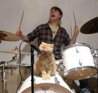 cat singer