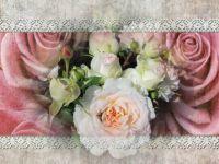 růže romantická