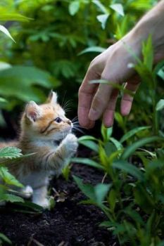 Helping Hand for Small Kitten