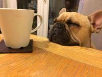 Marcel & mug