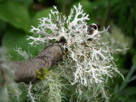 Lichen - The Life of the Party!