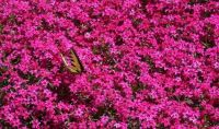 Butterfly On Thrift