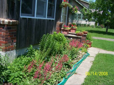 perennial beds 2008 - front of house