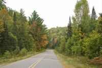 Fall color on Preskeekee Rd.