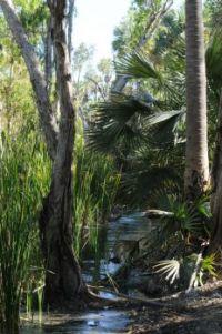 Bitter Springs Australia