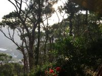 Mount Lebanon Vista