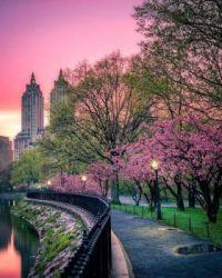 Central Park, New York.  6711