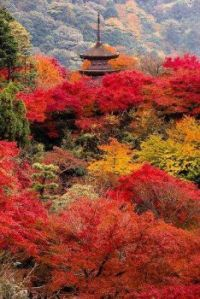 AUTUMN IN KYOTO  favouritenature