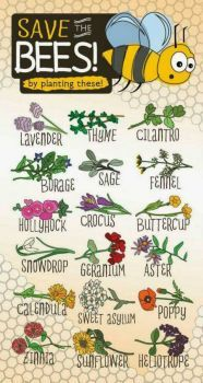 Save the Bees-plant these.