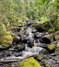Forest waterfall - sågsnårsfallet, sweden