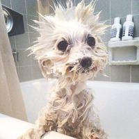 puppy in the bath lolol