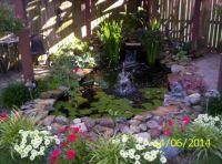 Our Pond in June 2014