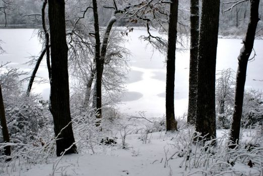 snowy lake and woods small