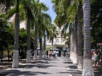 Alley of Palms, St. Maarten