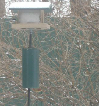 ice/sleet/snow so birds at the feeder today