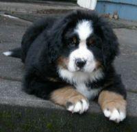 PuppyB 003